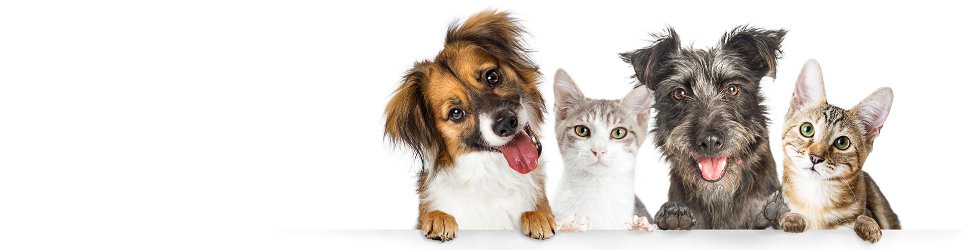 Slider Hunde und Katzen
