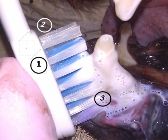 Zahnstein Ultraschall